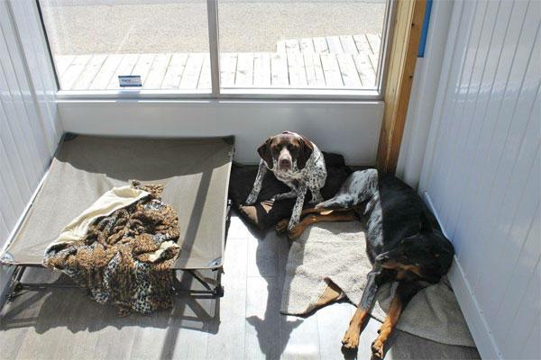 Dog Hotel Winnipeg Dog Daycare Dog Kennel Dog Boarding